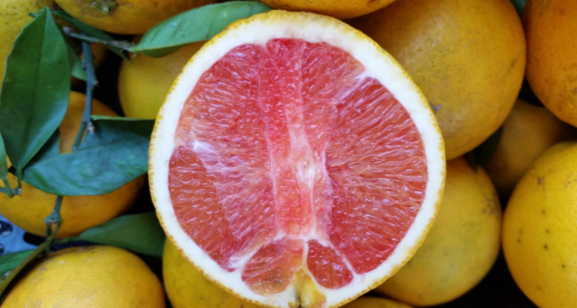 Farm Fresh Citrus